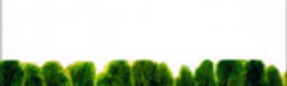 JEAN-CLAUDE PINSON Drapeau rouge