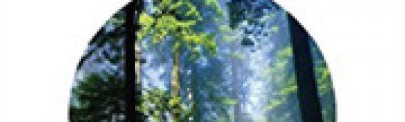 GUILLAUME DECOCQ, BERNARD KALAORA, CHLOÉ VLASSOPOULOS La forêt salvatrice