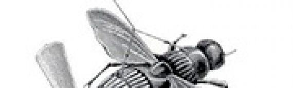 FRANCK TINLAND Ordre biologique, ordre technologique