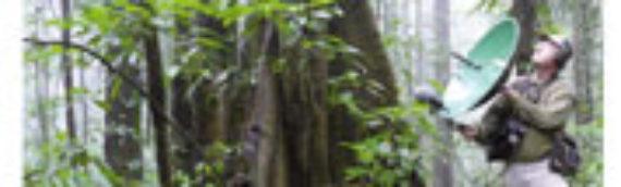 JEAN MOTTET (dir.) La forêt sonore